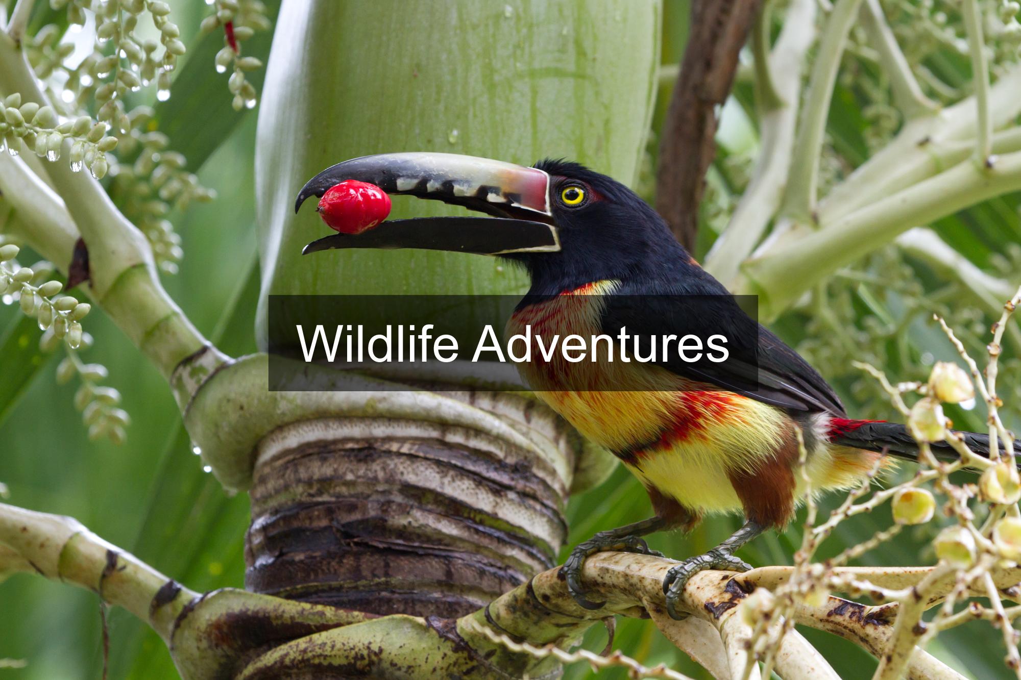 The Wildlife Adventures