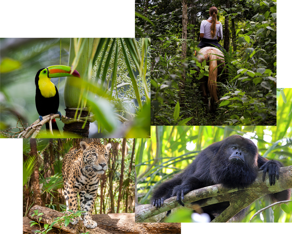 The Wildlife Adventures | Belize Adventure